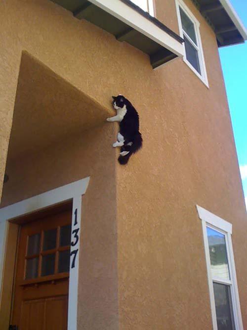 donde-está-el-gato-17