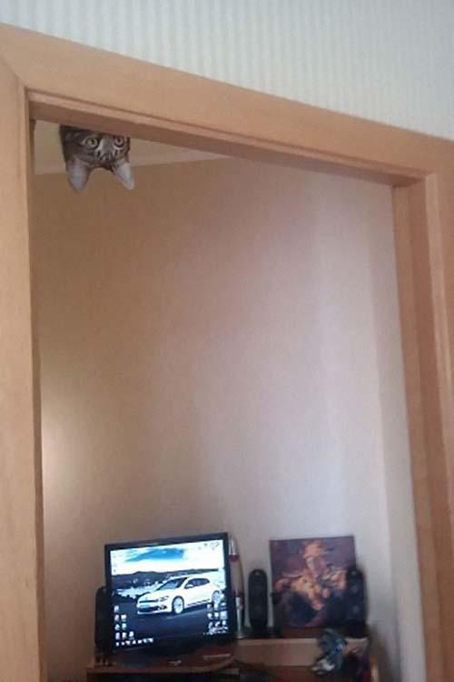 donde-está-el-gato-22