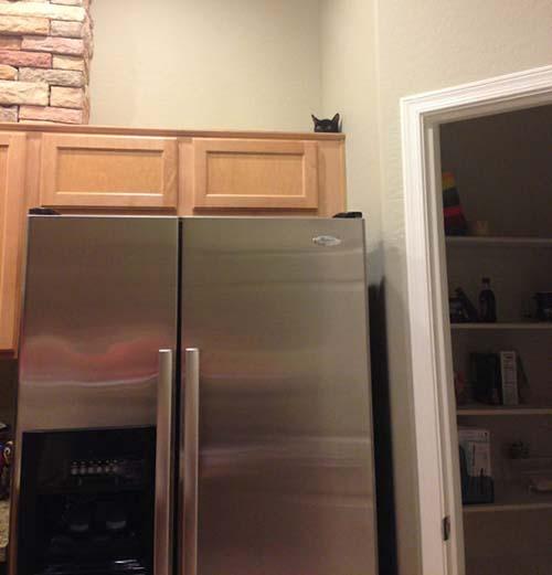 dónde está el gato