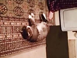 gato-se-hace-el-muerto