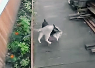 Perro carga a su hermano felino
