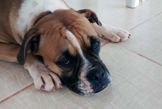 perro-deprimido