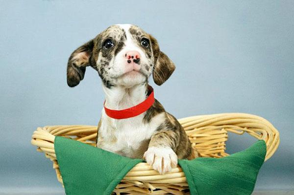 Perro para adopción
