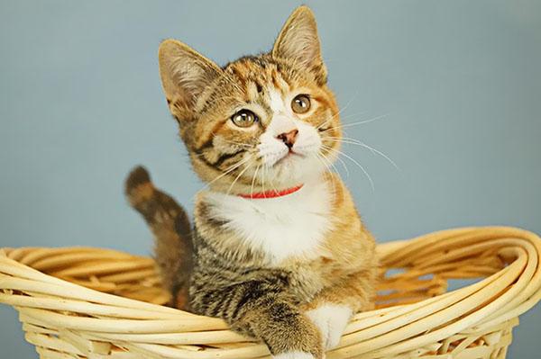 Gato en adopción