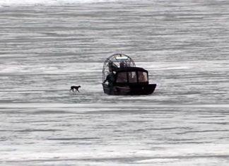 rescate-perro-lago-congelado