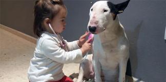 veterinaria-mas-pequeña-del-mundo