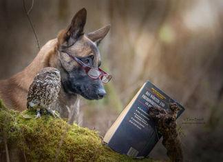 Un perro y un búho comparten hermosa amistad