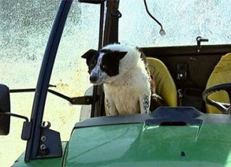 don-perro-conductor