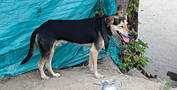 Perro héroe salva a su familia humana de un incendio