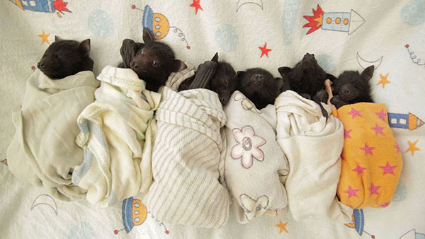 murciélagos-bebé-1