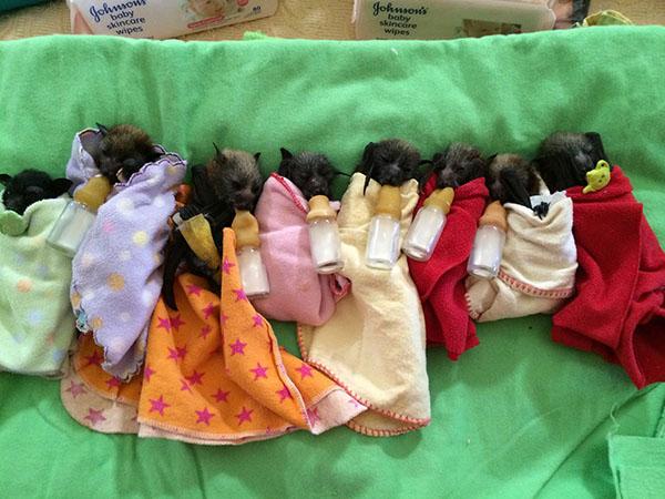 murciélagos-bebé-9