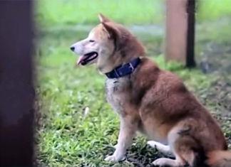 La vida de un perro abandonado