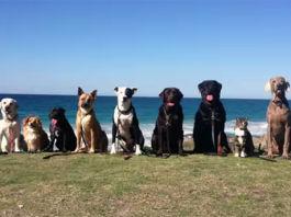 perros-felices