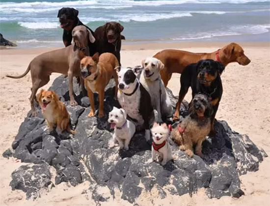 perros-happy