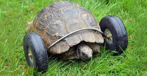 Prótesis tortuga
