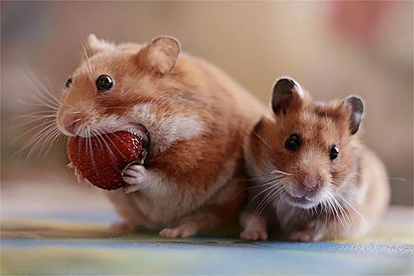animales-comiendo-frutas-10