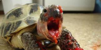 Animales devorando frutas como de película