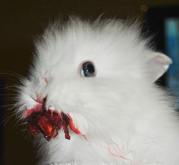animales-comiendo-frutas-6
