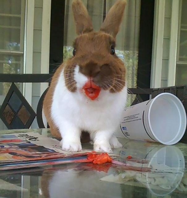 animales-comiendo-frutas-7