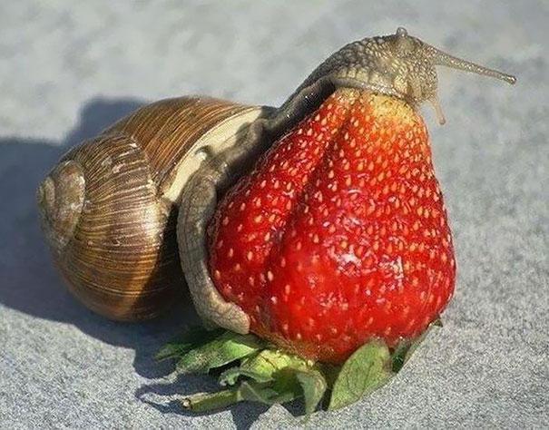 animales-comiendo-frutas-9