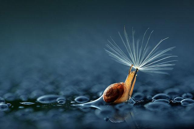 animales-y-sus-paraguas-naturales-1
