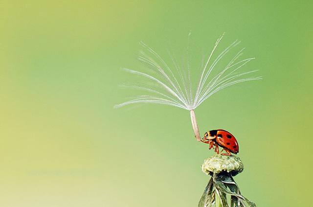 animales-y-sus-paraguas-naturales-11