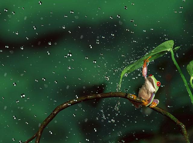 animales-y-sus-paraguas-naturales-15