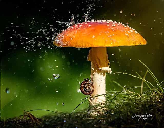 animales-y-sus-paraguas-naturales-3