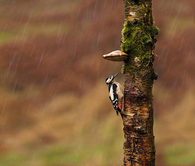 animales-y-sus-paraguas-naturales-7