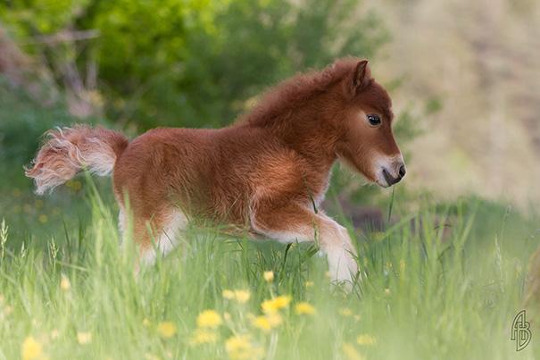 caballos-miniatura-15
