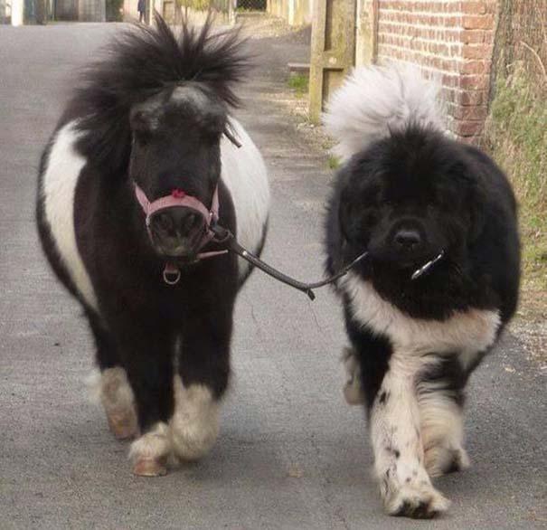 caballos-miniatura