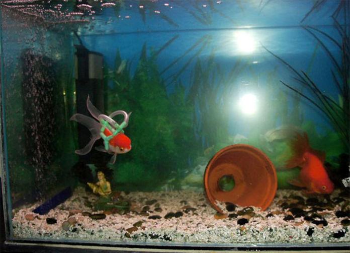 Silla de ruedas para peces