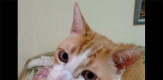 Gato canta