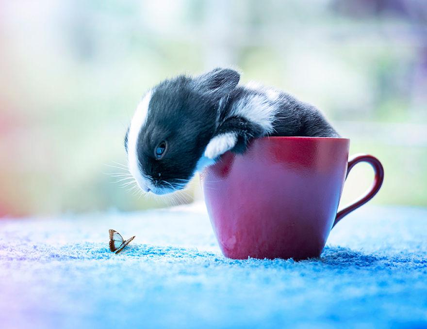 hermosos-conejos-creciendo-10