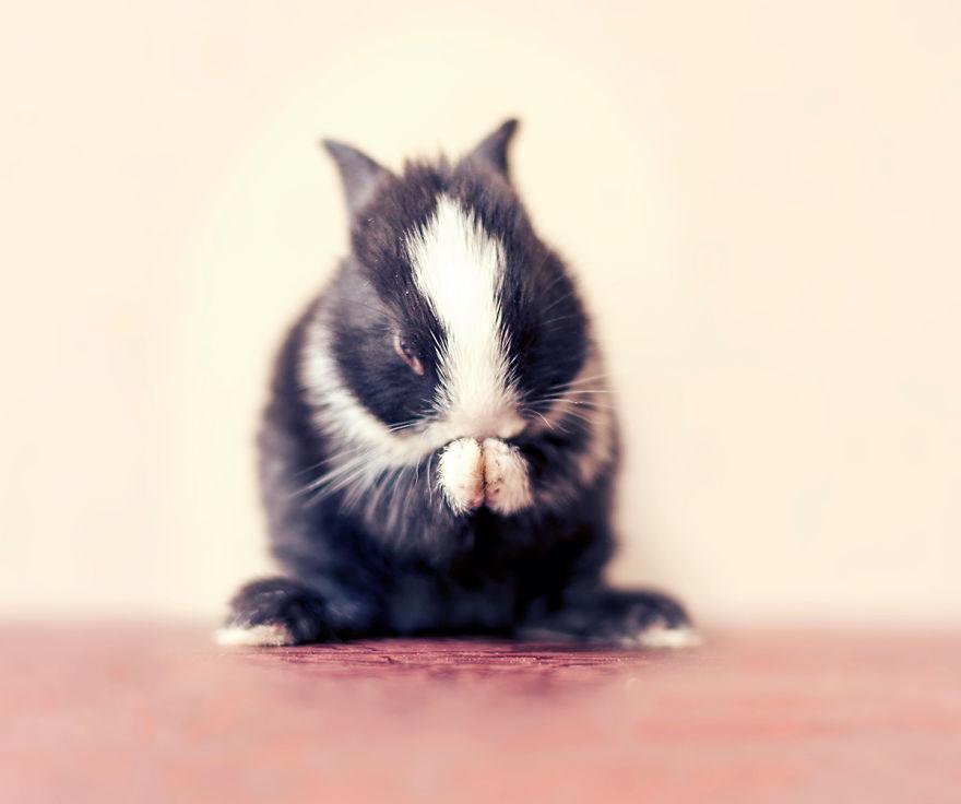 hermosos-conejos-creciendo-12