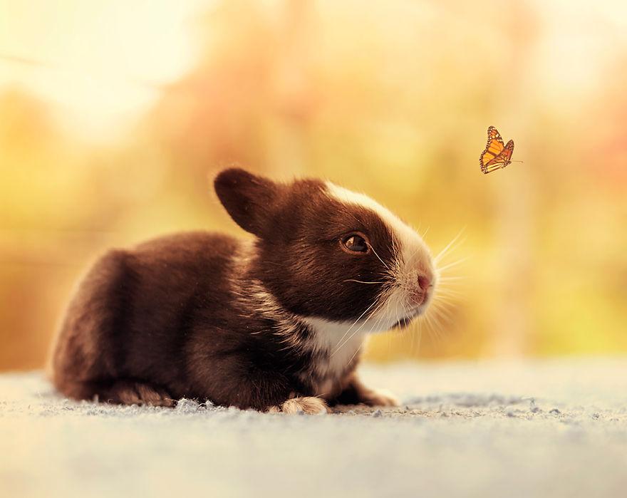 hermosos-conejos-creciendo-13