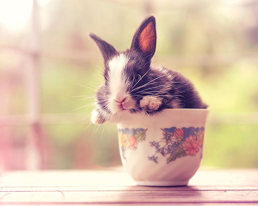 hermosos-conejos-creciendo-14