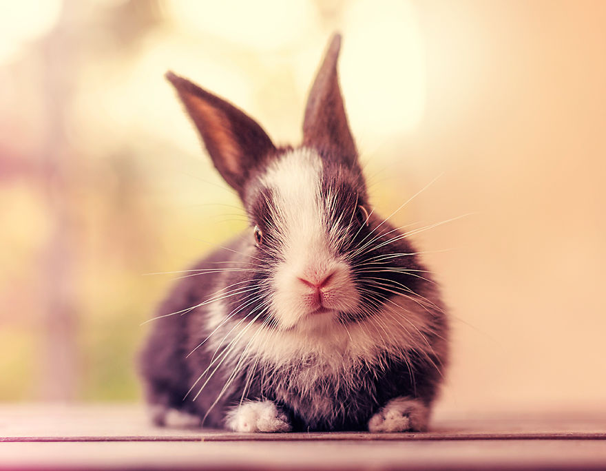hermosos-conejos-creciendo-15