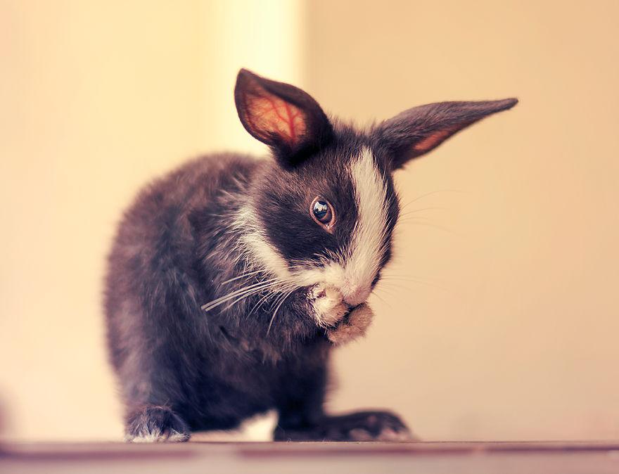hermosos-conejos-creciendo-16