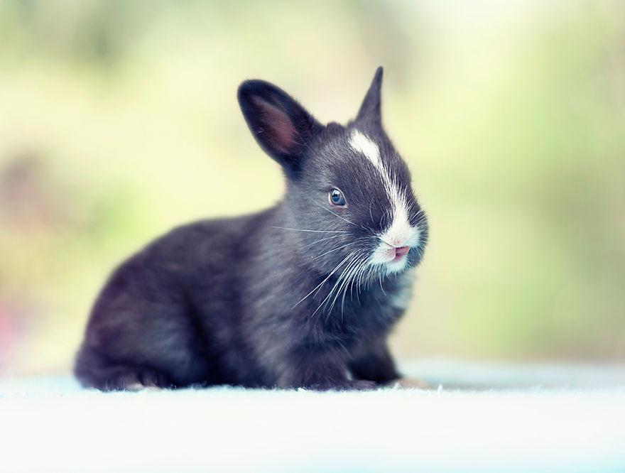 hermosos-conejos-creciendo-8