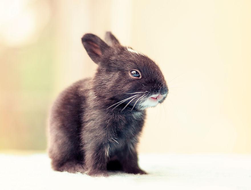 hermosos-conejos-creciendo-9