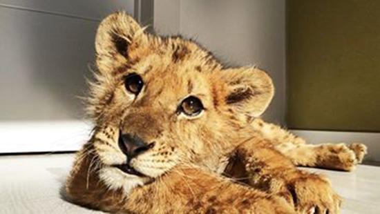 magnus-león-maltratado
