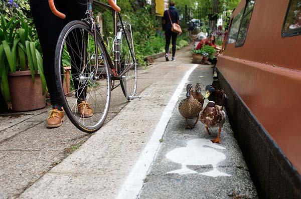 patos-tienen-su-propio-carril-2