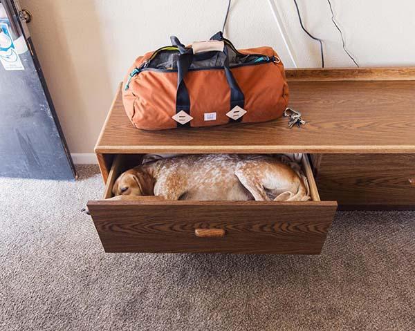 perro-compañero-de-viajes-10