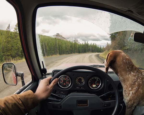 perro-compañero-de-viajes-11