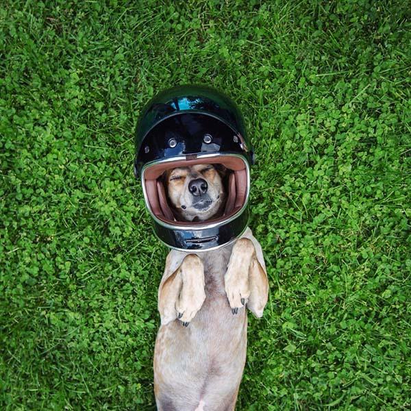 perro-compañero-de-viajes-2