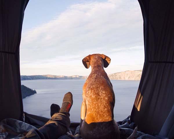 perro-compañero-de-viajes-20