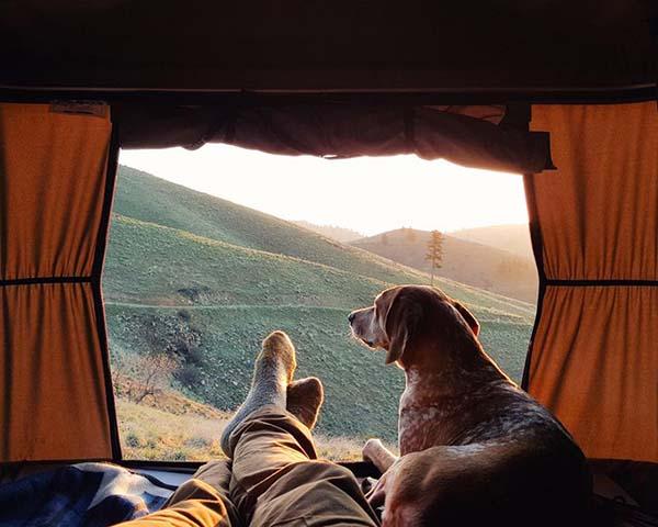 perro-compañero-de-viajes-3