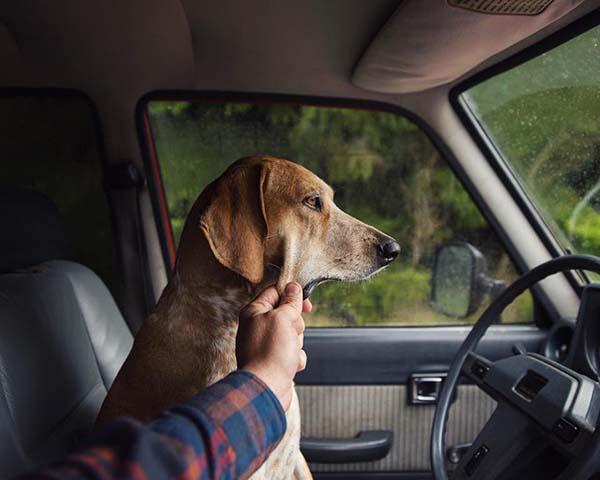 perro-compañero-de-viajes-4