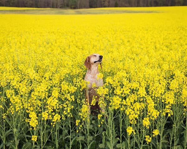 perro-compañero-de-viajes-6